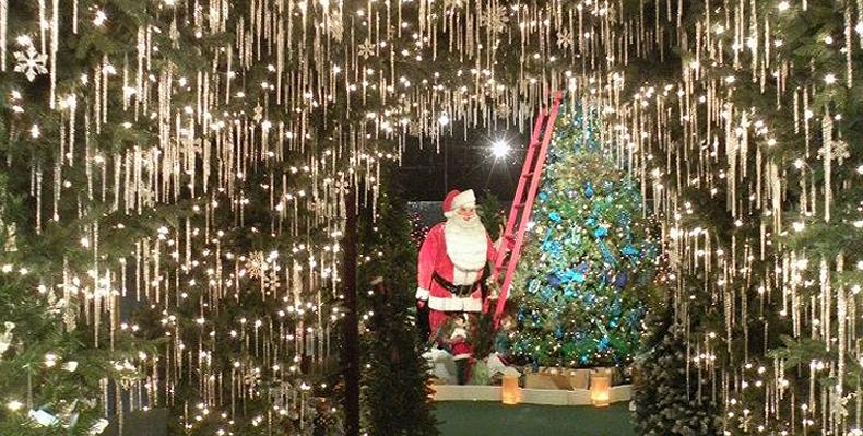 Robert's Christmas Wonderland